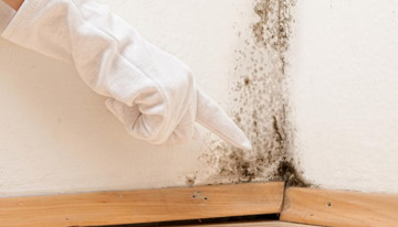 Mould growth in the home